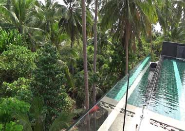pool with jungle view